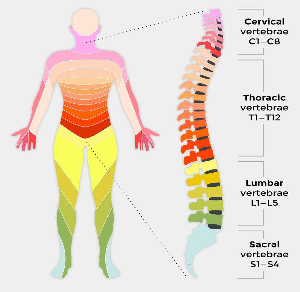 spine treatment image